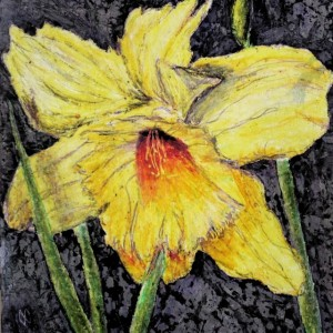Daffodil by Mary Wallace